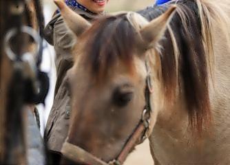 Horse Adventure & English für Kinder von 6-15 Jahre