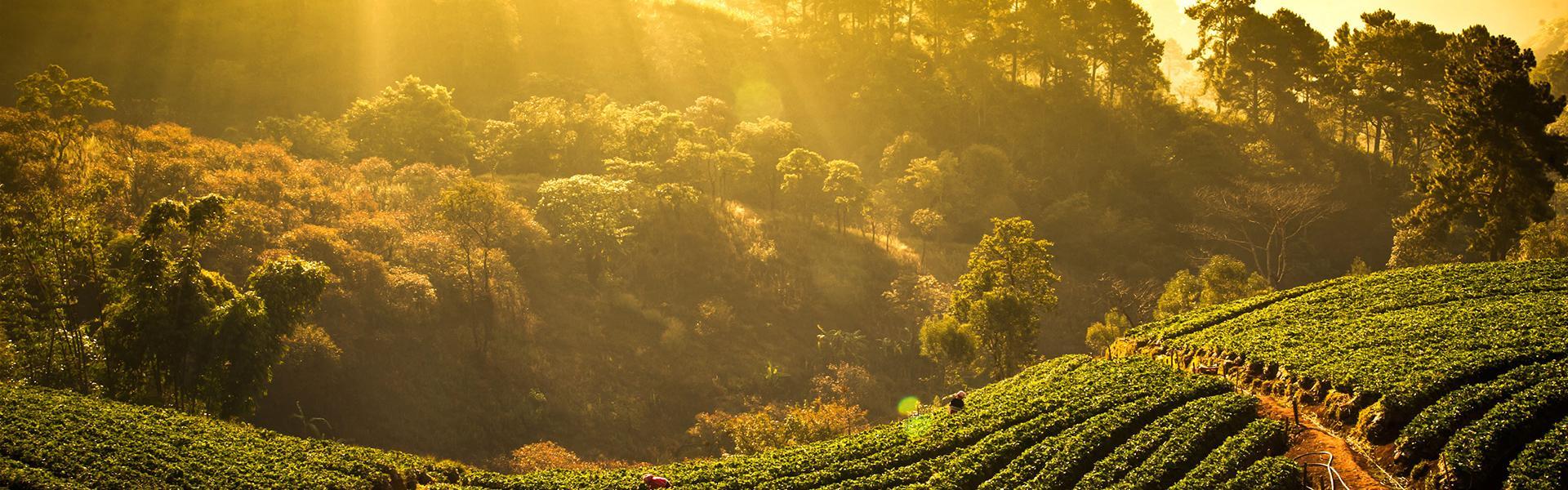 Weinseminar, Weinverkostung, Sommelier Kurs